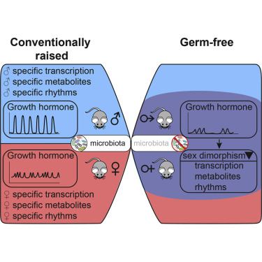 The Mouse Microbiome Is Required for Sex-Specific Diurnal
