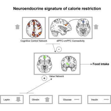 Neurocognitive and Hormonal Correlates of Voluntary Weight