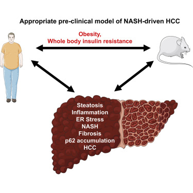 Preclinical Models for Studying NASH-Driven HCC: How Useful Are They on