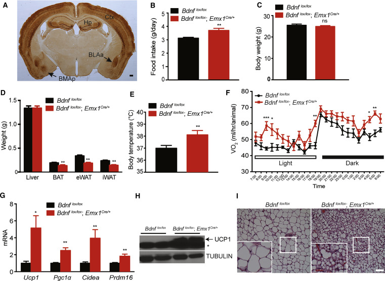 Activation of Anxiogenic Circuits Instigates Resistance to