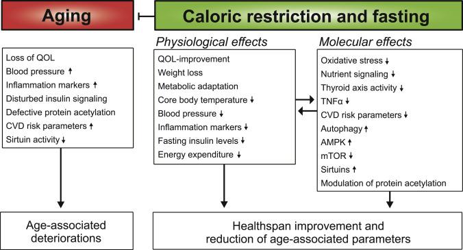 Caloric Restriction Mimetics against Age-Associated Disease: Targets