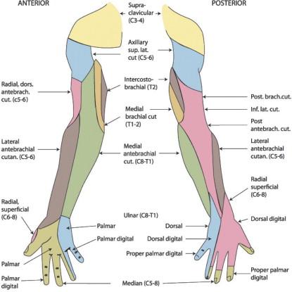 Betegségek at Academy Of Massage Therapy - StudyBlue
