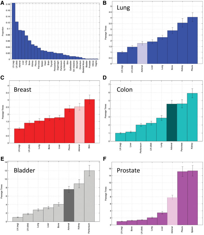 Adrenal Metastases In Lung Cancer Clinical Implications Of A Mathematical Model Sciencedirect