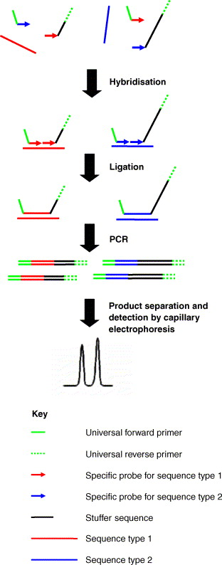 Nucleic acid amplification-based techniques for pathogen detection ...