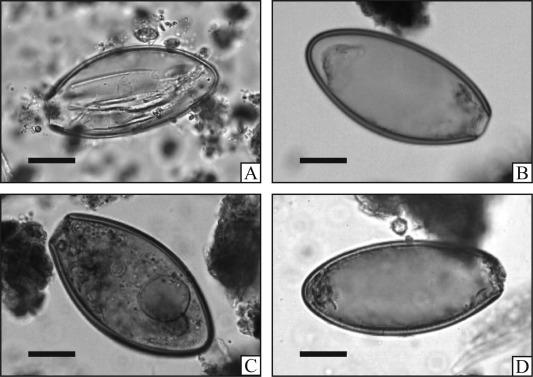 Is oxyuris equi. Is oxyuris equi, Ciclo biologico de oxyuris equi, Les maternelles papillomavirus