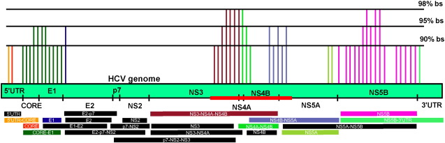 Heterogeneous genomic locations within NS3, NS4A and NS4B