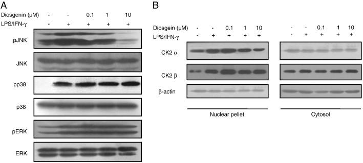Diosgenin inhibits macrophage-derived inflammatory mediators through