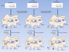 prednisolone dosage for asthma flare
