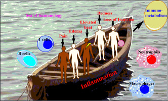 dee2acee836 Inflammation research sails through the sea of immunology to reach ...