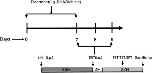Effect of ketamine combined with DHA on lipopolysaccharide