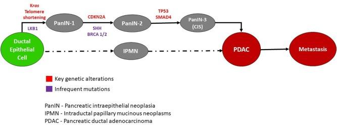 Hasnyálmirigyrák biomarker, Hasnyálmirigyrák – Wikipédia