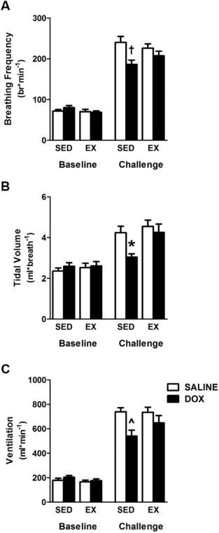 Mitochondrial accumulation of doxorubicin in cardiac and diaphragm