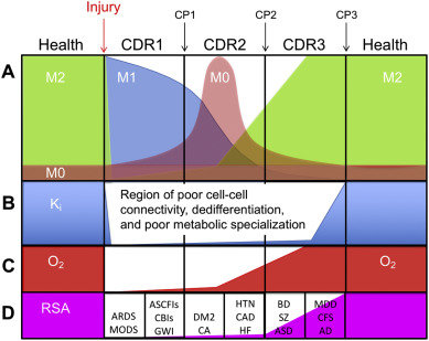 Metabolic features and regulation of the healing cycle—A new