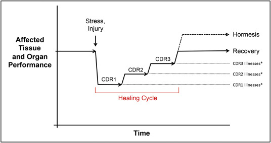 Metabolic Features And Regulation Of The Healing Cycle A New Model