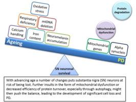 Mitochondrial Mechanisms of Degeneration and Repair in Parkinsons Disease