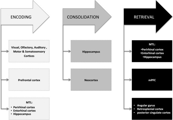 Episodic Memory In Normal Aging And Alzheimer Disease Insights From