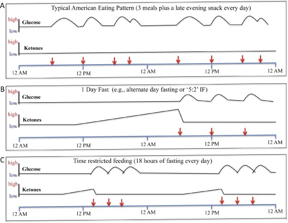 Impact of intermittent fasting on health and disease processes