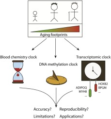 Biohorology And Biomarkers Of Aging Current State Of The Art Challenges And Opportunities Sciencedirect
