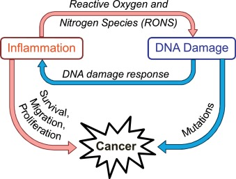 Inflammation-induced DNA damage, mutations and cancer