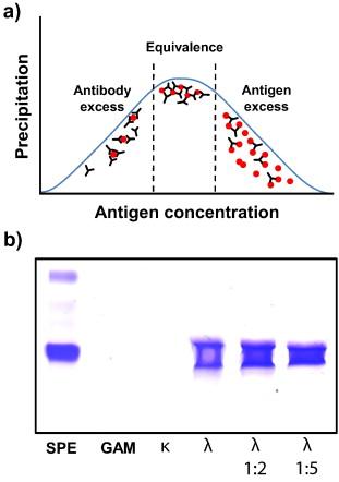 Antigen excess in modern immunoassays: To anticipate on the