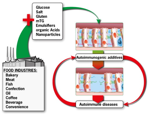 Changes in intestinal tight junction permeability associated