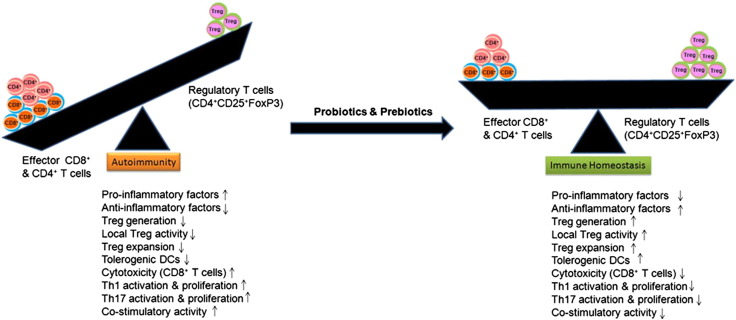 induction of regulatory t cells a role for probiotics and