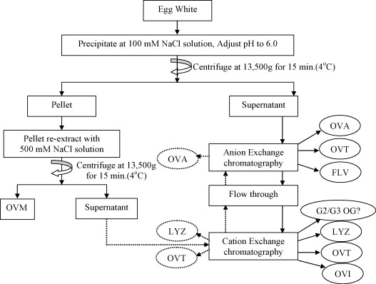 purification of the enzyme lysozyme from egg white lab report