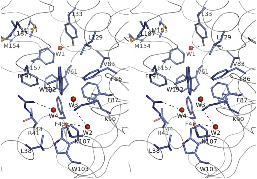 Spatial Structure Of The Novel Light Sensitive Photoprotein Berovin