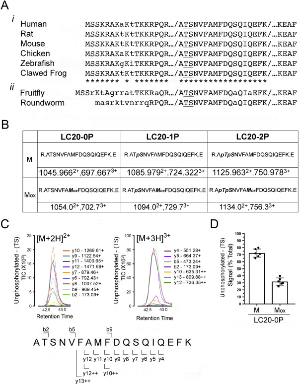 Quantitation of myosin regulatory light chain