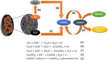 In-situ electrochemical deposition of dendritic Cu-Cu2S