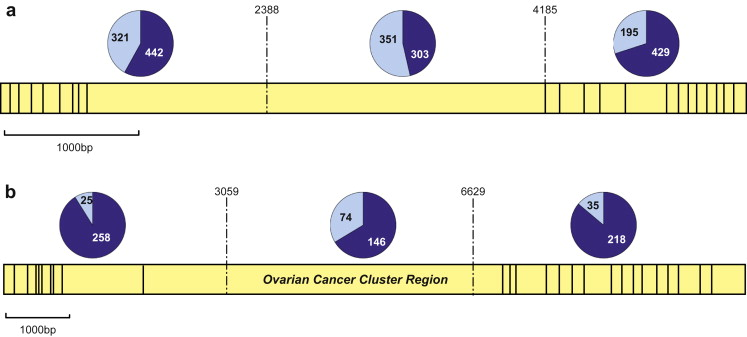 The Contribution Of Brca1 And Brca2 To Ovarian Cancer Sciencedirect