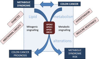 Genes Associated With Metabolic Syndrome Predict Disease Free Survival In Stage Ii Colorectal Cancer Patients A Novel Link Between Metabolic Dysregulation And Colorectal Cancer Sciencedirect