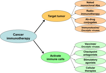 Cancer immunotherapy: Strategies for personalization and