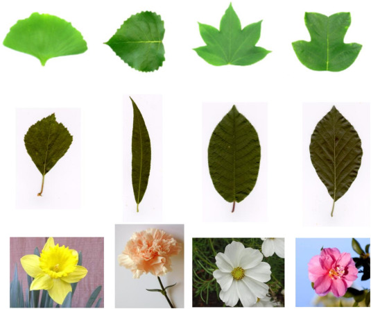 Real-world plant species identification based on deep