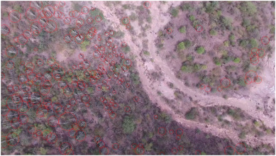 Columnar cactus recognition in aerial images using a deep