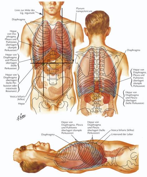 Die Leber – mehr als GOT und GPT? - ScienceDirect