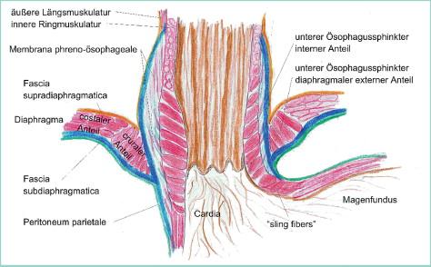 Funktionsstörungen des Ösophagus und des gastro-ösophagealen ...