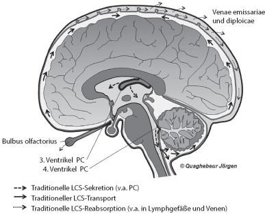 Hydrodynamik des Liquor cerebrospinalis – eine Neubewertung ...