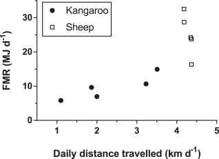Field metabolic rate, movement distance, and grazing
