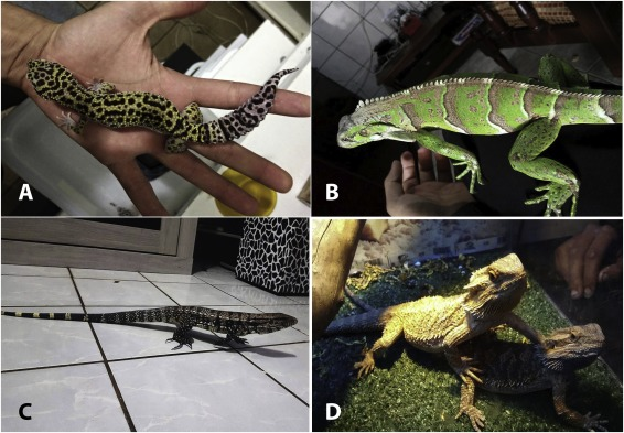 Keeping reptiles as pets in Brazil: Ethnozoological and conservation
