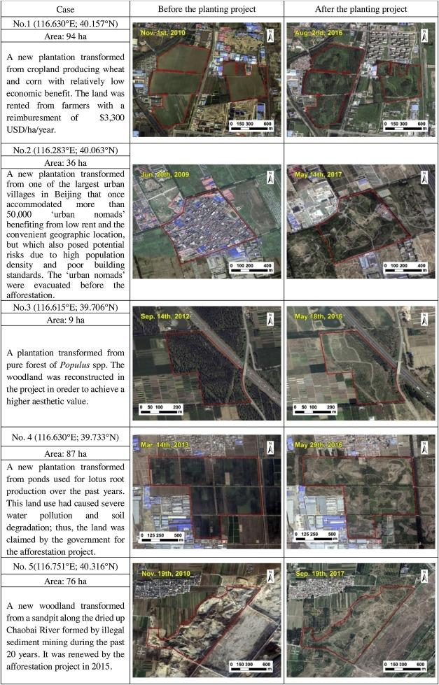 Beijing's 50 million new urban trees: Strategic governance for large