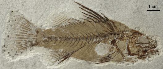 The uppermost Oligocene of Aix-en-Provence (Bouches-du-Rhône