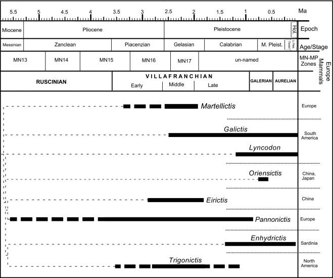 Revising The Species Mustela Ardea Gervais 18481852