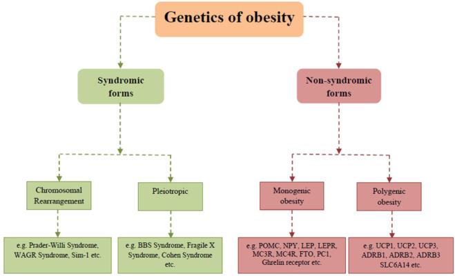 Molecular Genetics Of Human Obesity A Comprehensive Review Sciencedirect