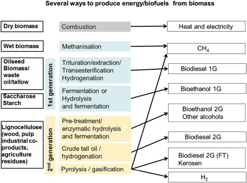 Use of vegetal biomass for biofuels and bioenergy. Competition with ...