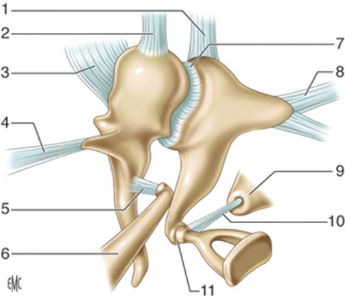 Anatomía del oído medio - ScienceDirect
