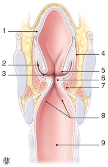 Quistes de la laringe y laringoceles - ScienceDirect