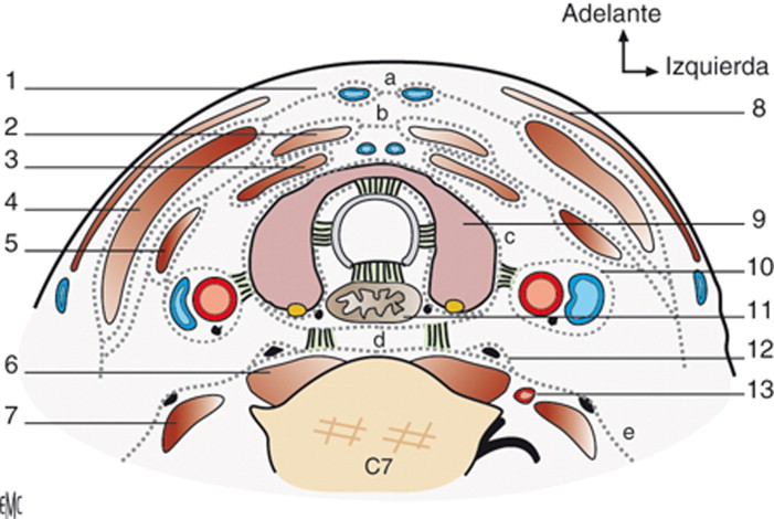 Anatomía y fisiología del esófago - ScienceDirect