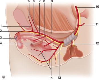 Cirugía de próstata en martina franca 2020