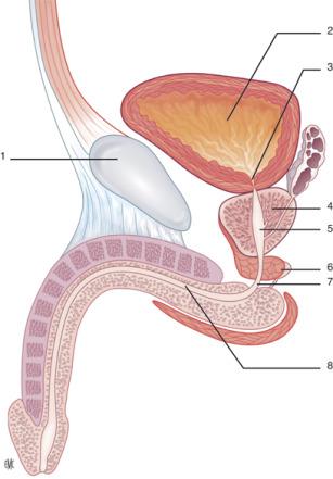 9 semanas después de la extracción de próstatas